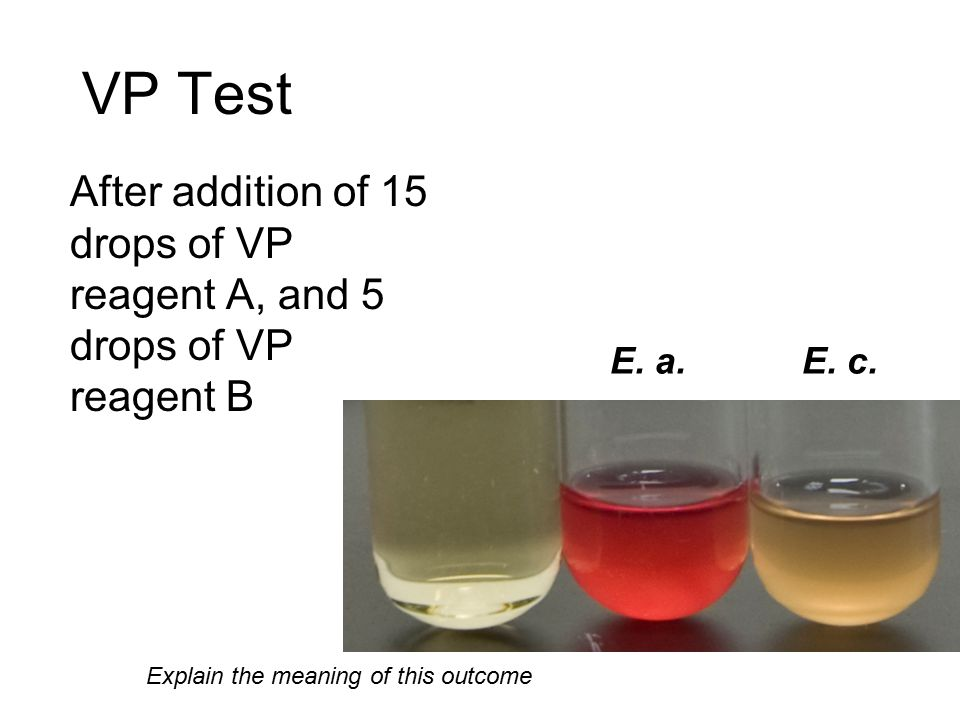 VP Test After addition of 15 drops of VP reagent A, and 5 drops of VP reagent B.
