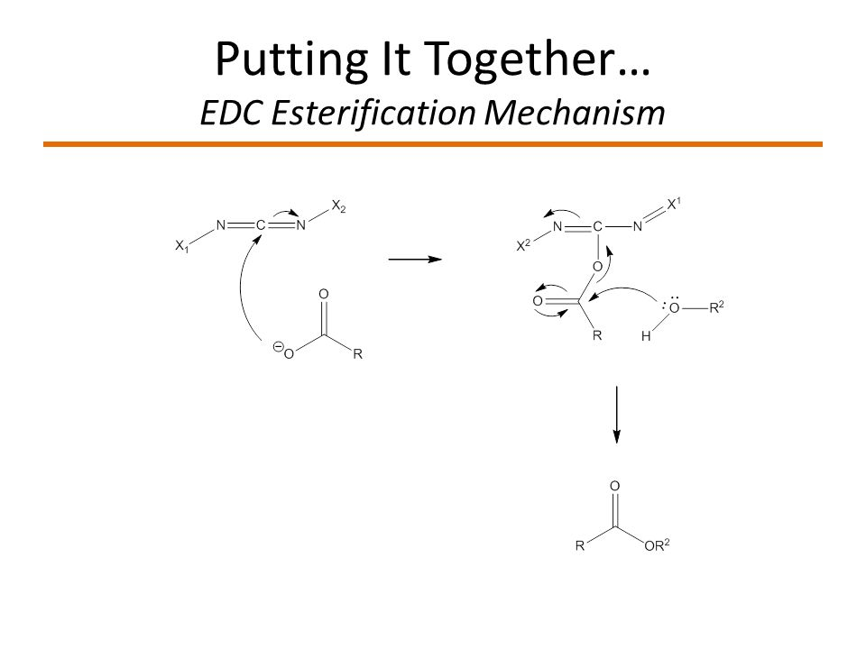 Putting It Together… EDC Esterification Mechanism