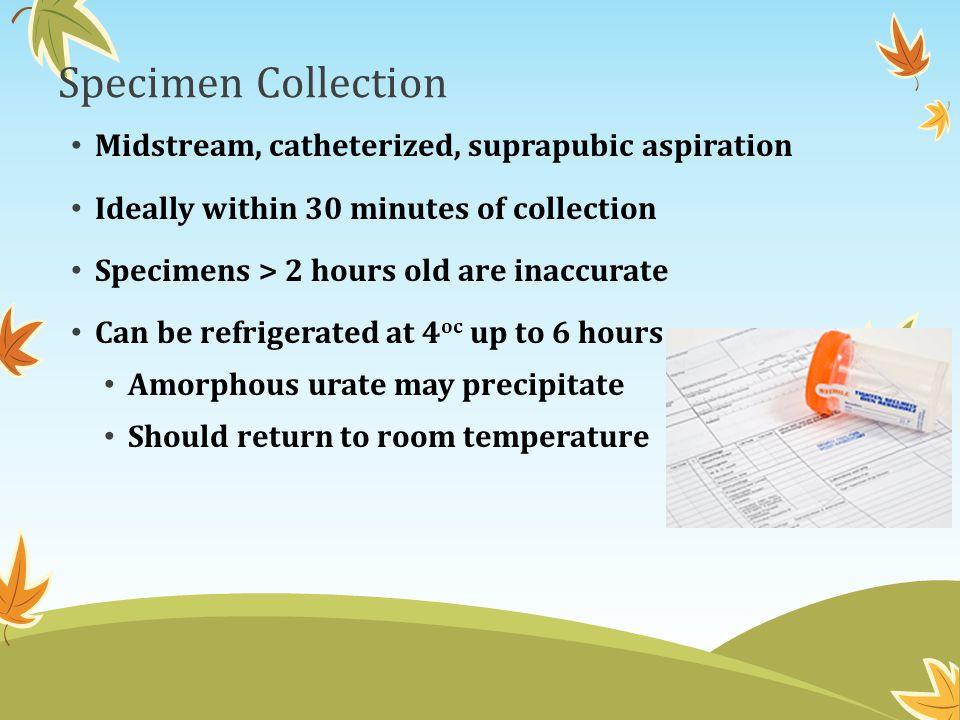 Specimen Collection Midstream, catheterized, suprapubic aspiration