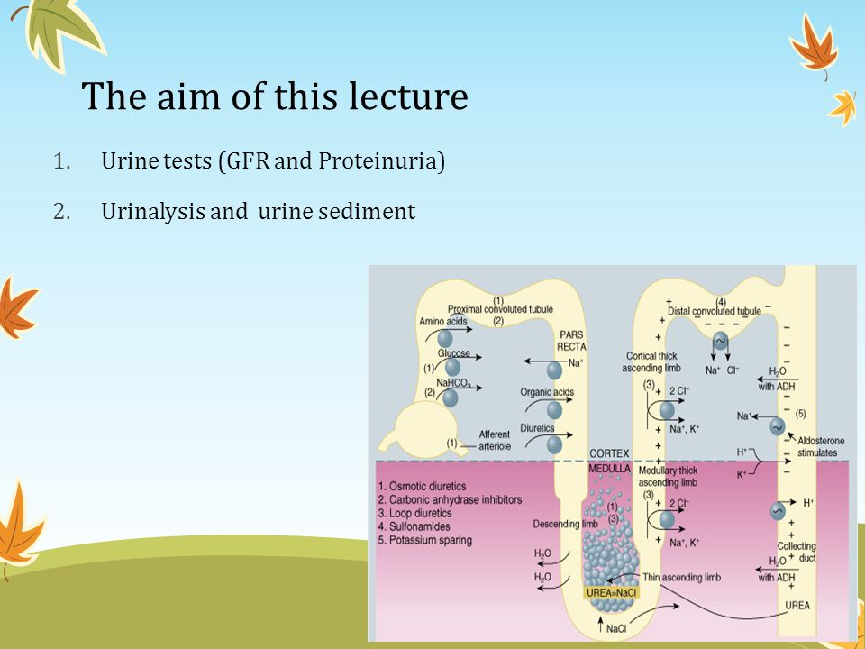 The aim of this lecture Urine tests (GFR and Proteinuria)