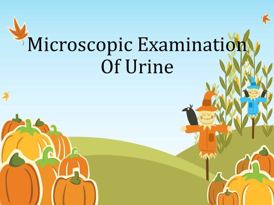 Microscopic Examination Of Urine