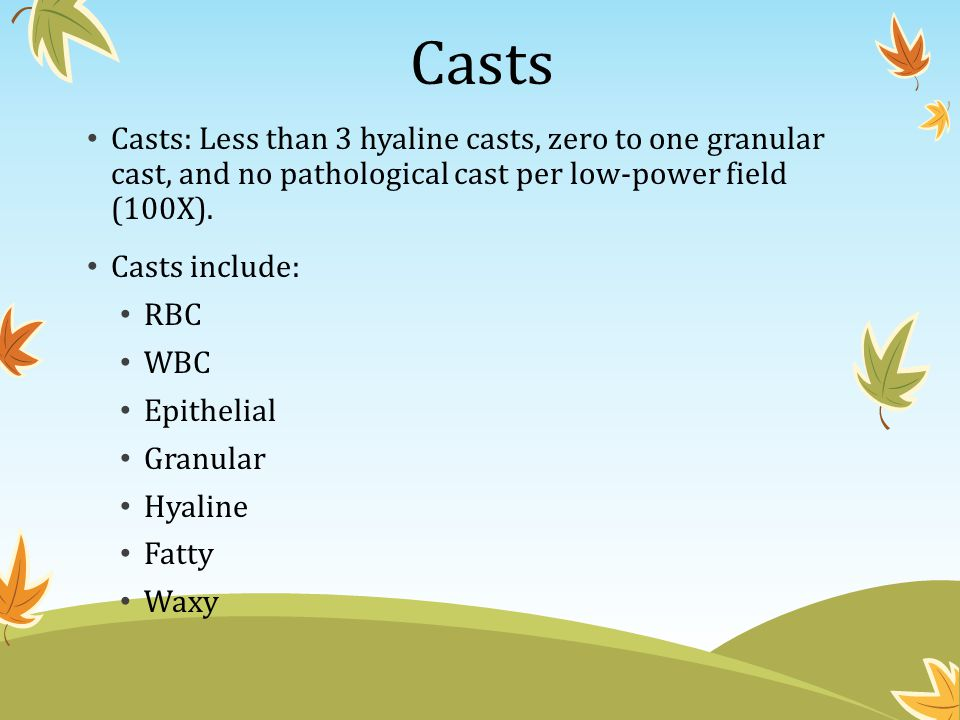 Casts Casts: Less than 3 hyaline casts, zero to one granular cast, and no pathological cast per low-power field (100X).