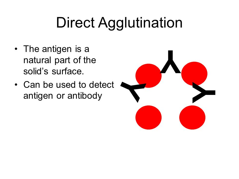 Y Y Y Direct Agglutination
