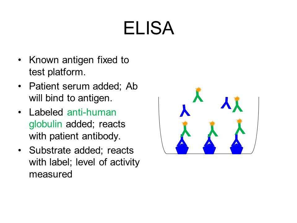 ELISA Y Y Y Y Y Y Y Y Y Y Known antigen fixed to test platform.