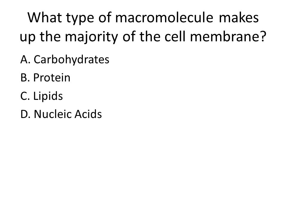 What type of macromolecule makes up the majority of the cell membrane