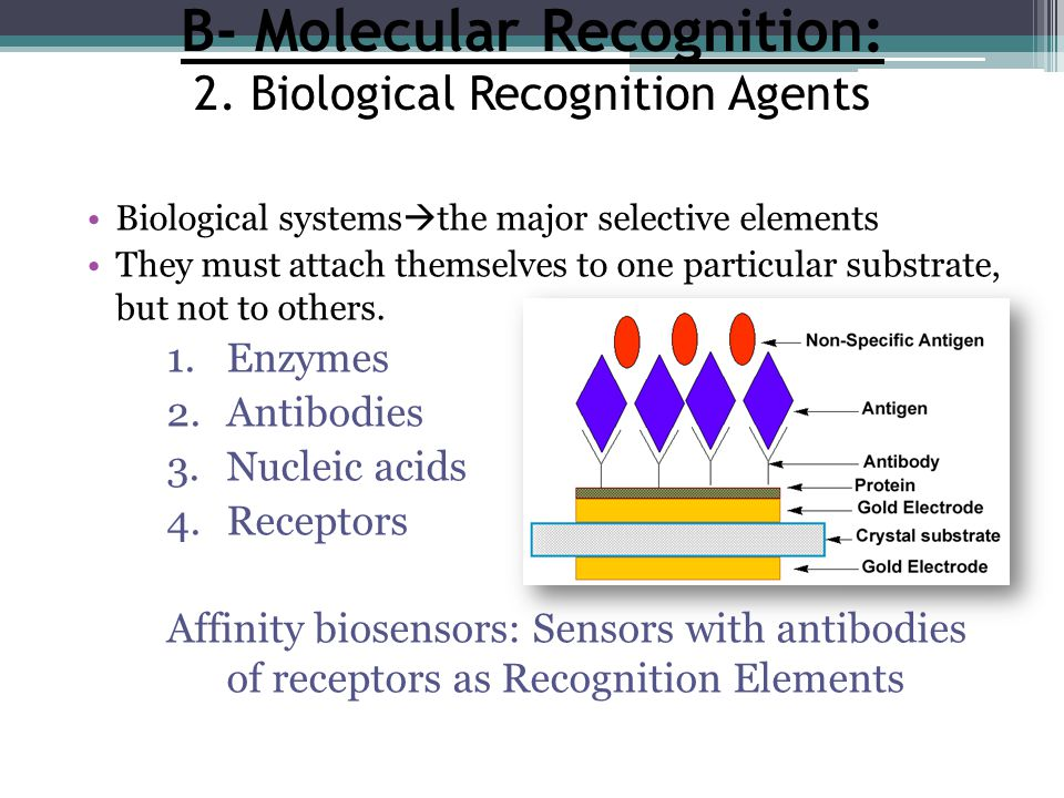 B- Molecular Recognition: 2. Biological Recognition Agents