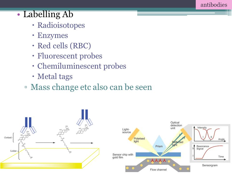 Labelling Ab Mass change etc also can be seen Radioisotopes Enzymes