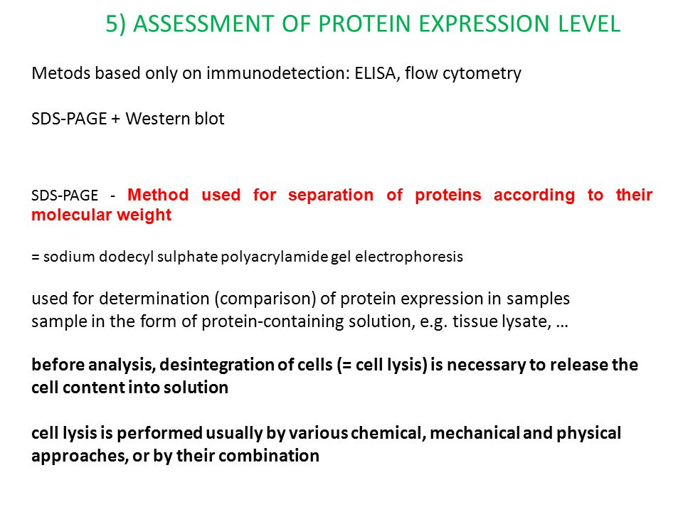5) ASSESSMENT OF PROTEIN EXPRESSION LEVEL