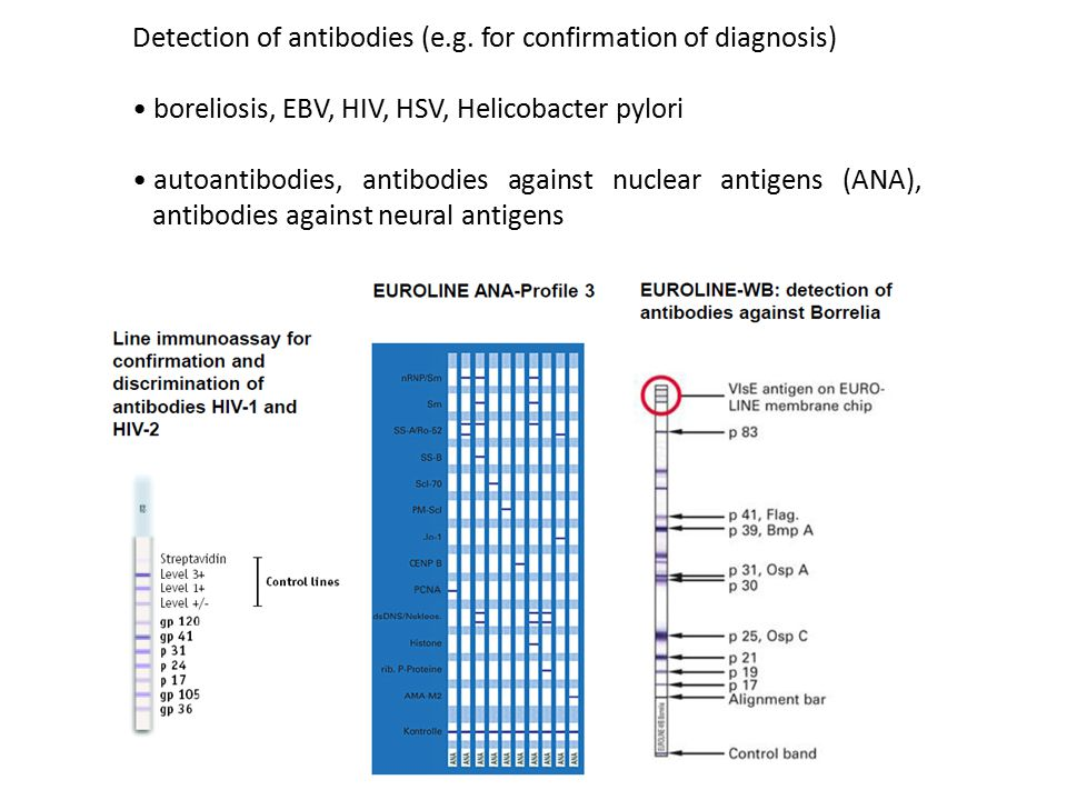 Detection of antibodies (e.g. for confirmation of diagnosis)