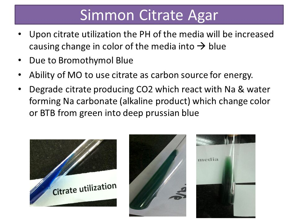 Simmon Citrate Agar Upon citrate utilization the PH of the media will be increased causing change in color of the media into  blue.