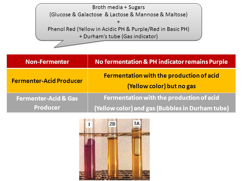 No fermentation & PH indicator remains Purple Non-Fermenter