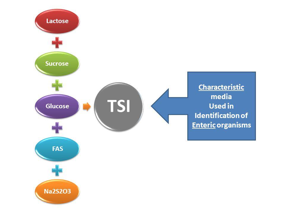 Identification of Enteric organisms