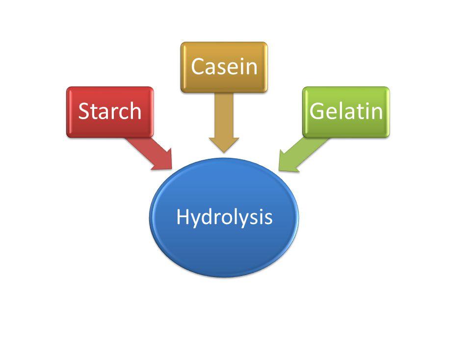 Hydrolysis Starch Casein Gelatin