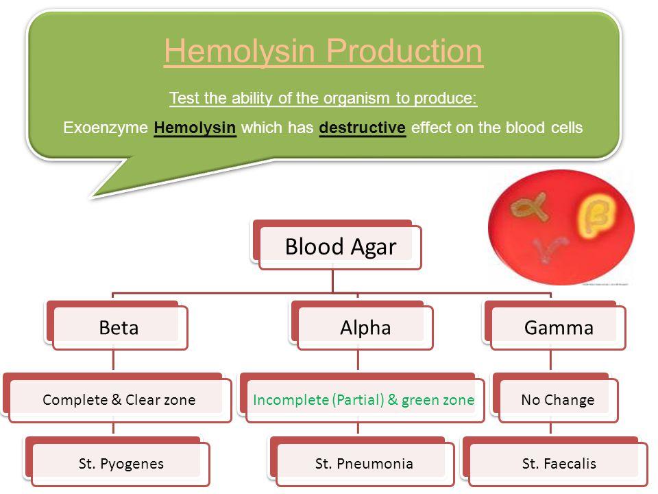 Hemolysin Production Blood Agar Beta Alpha Gamma