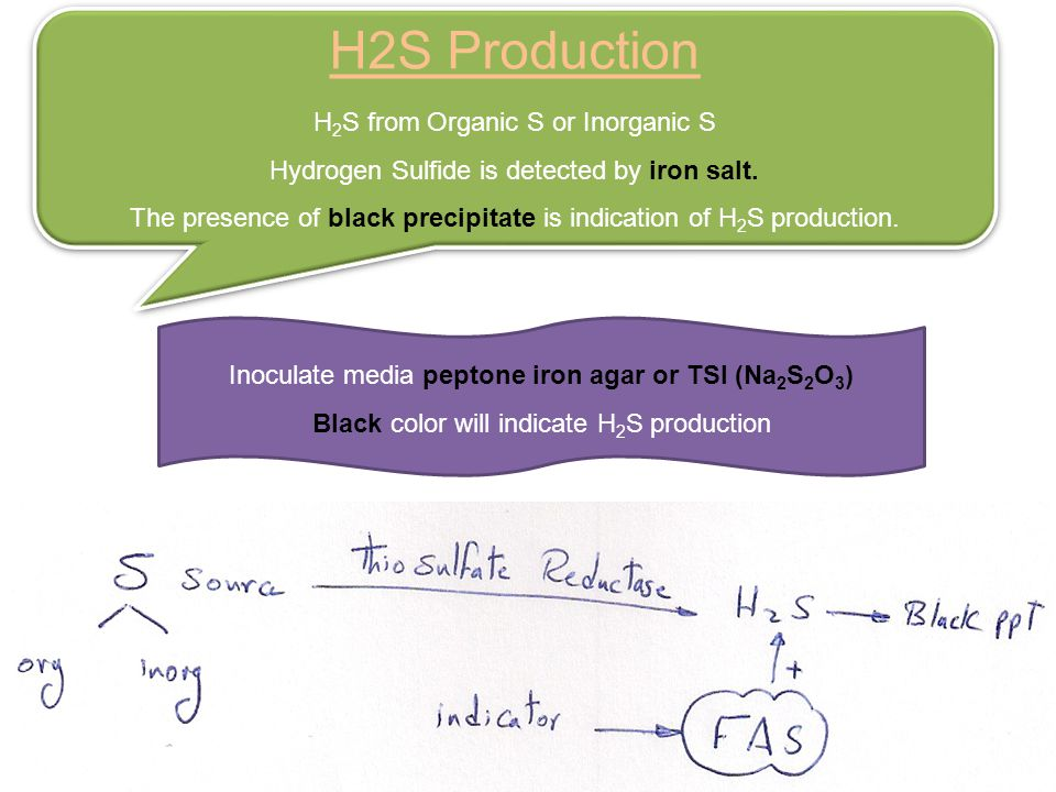 H2S Production H2S from Organic S or Inorganic S