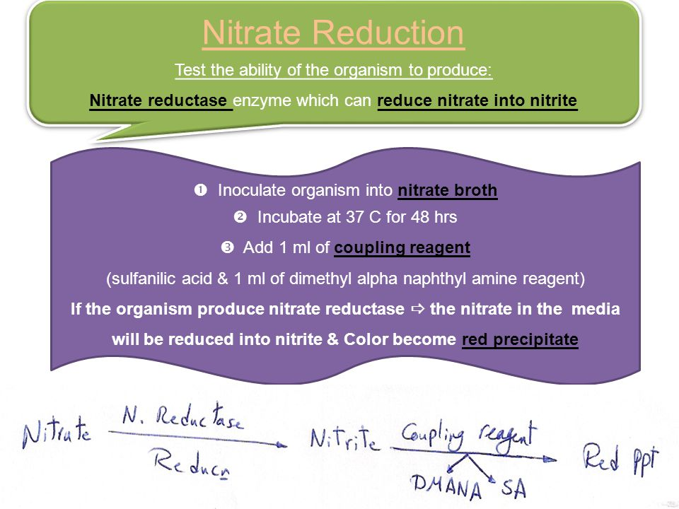 Nitrate Reduction Test the ability of the organism to produce: