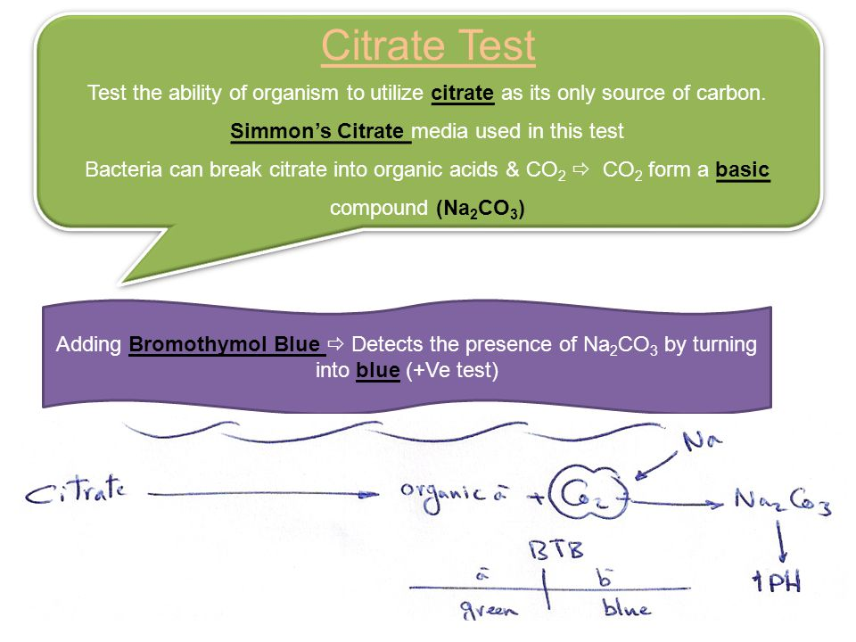 Simmon's Citrate media used in this test