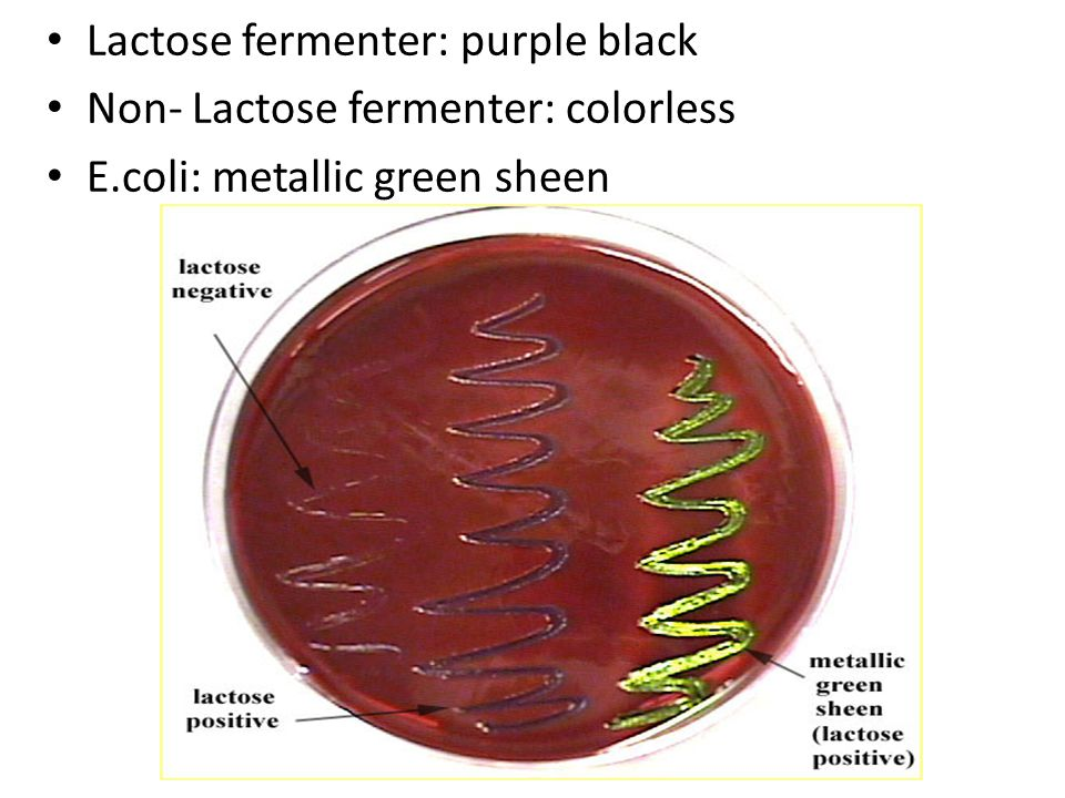 Lactose fermenter: purple black