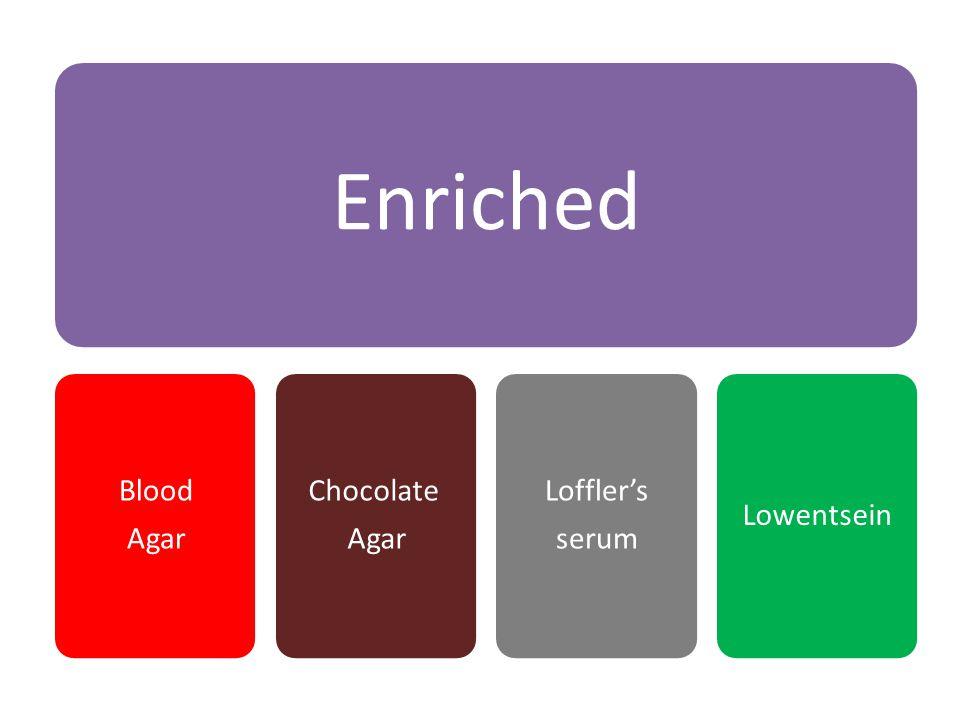 Enriched Blood Agar Chocolate Loffler's serum Lowentsein