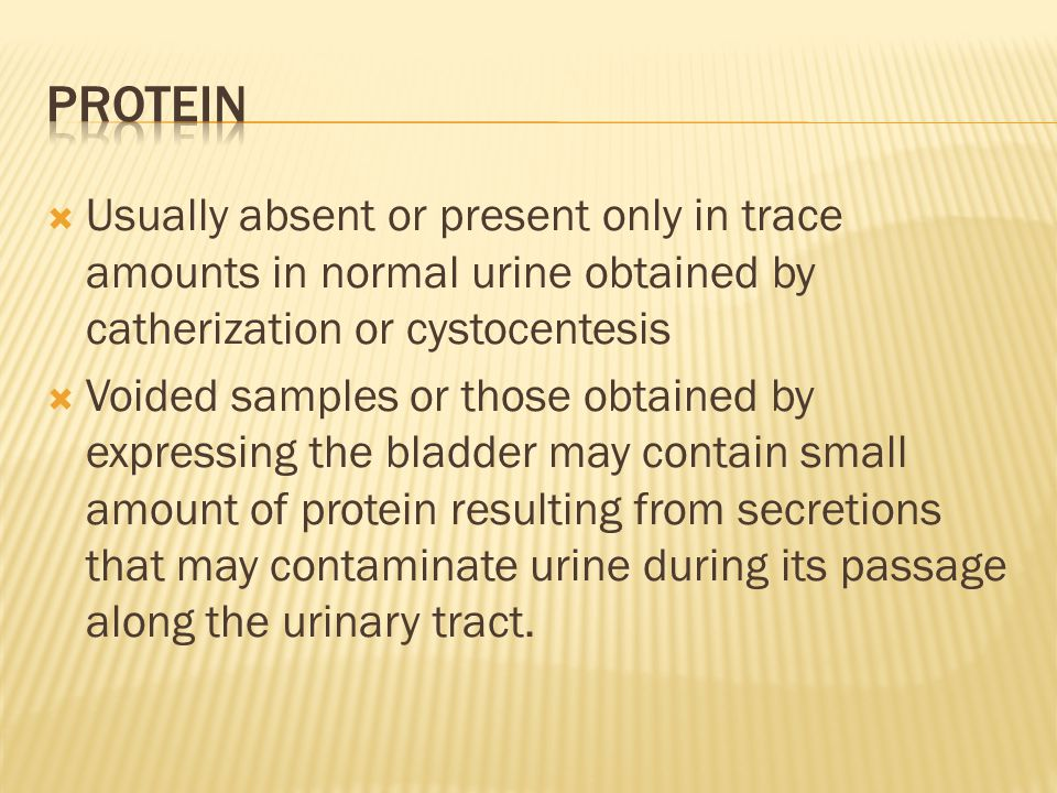 Protein Usually absent or present only in trace amounts in normal urine obtained by catherization or cystocentesis.