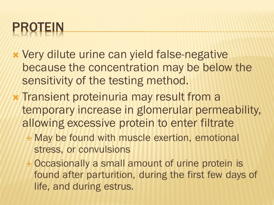 protein Very dilute urine can yield false-negative because the concentration may be below the sensitivity of the testing method.