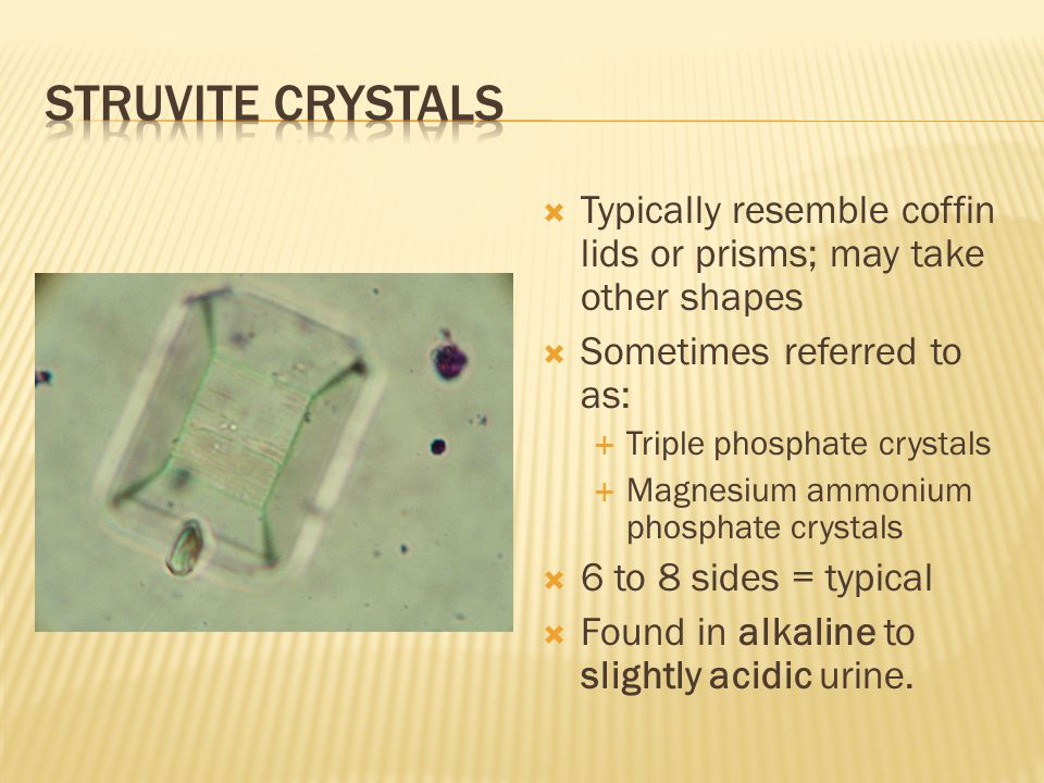 Struvite crystals Typically resemble coffin lids or prisms; may take other shapes. Sometimes referred to as: