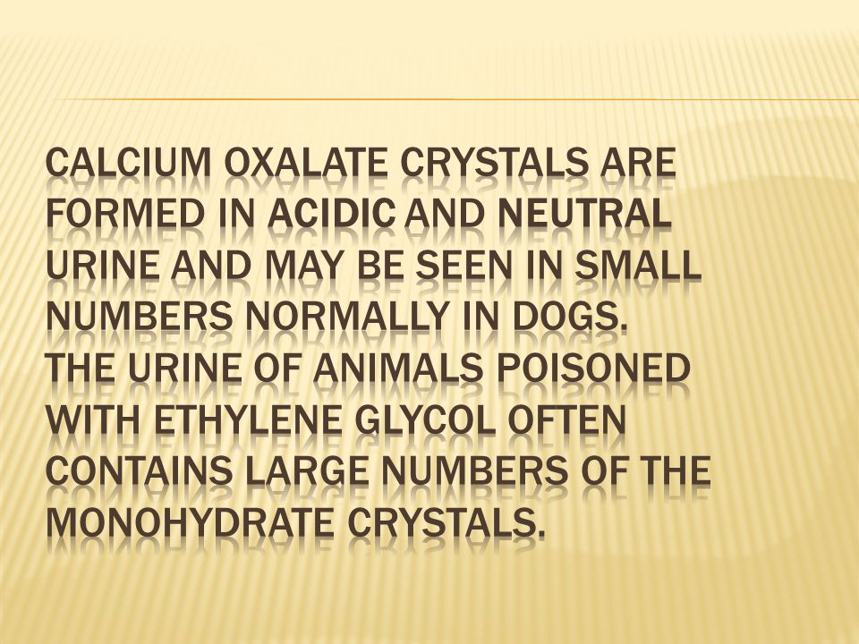 Calcium oxalate crystals are formed in acidic and neutral urine and may be seen in small numbers normally in dogs.