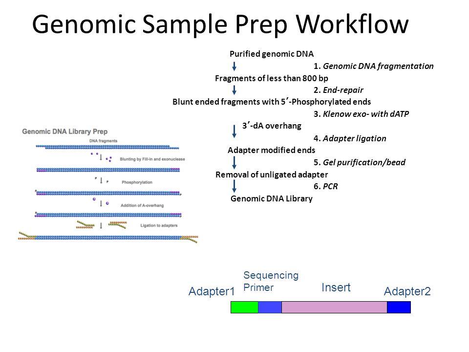 Genomic Sample Prep Workflow