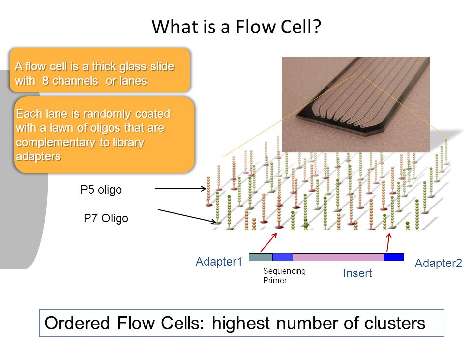 What is a Flow Cell Ordered Flow Cells: highest number of clusters