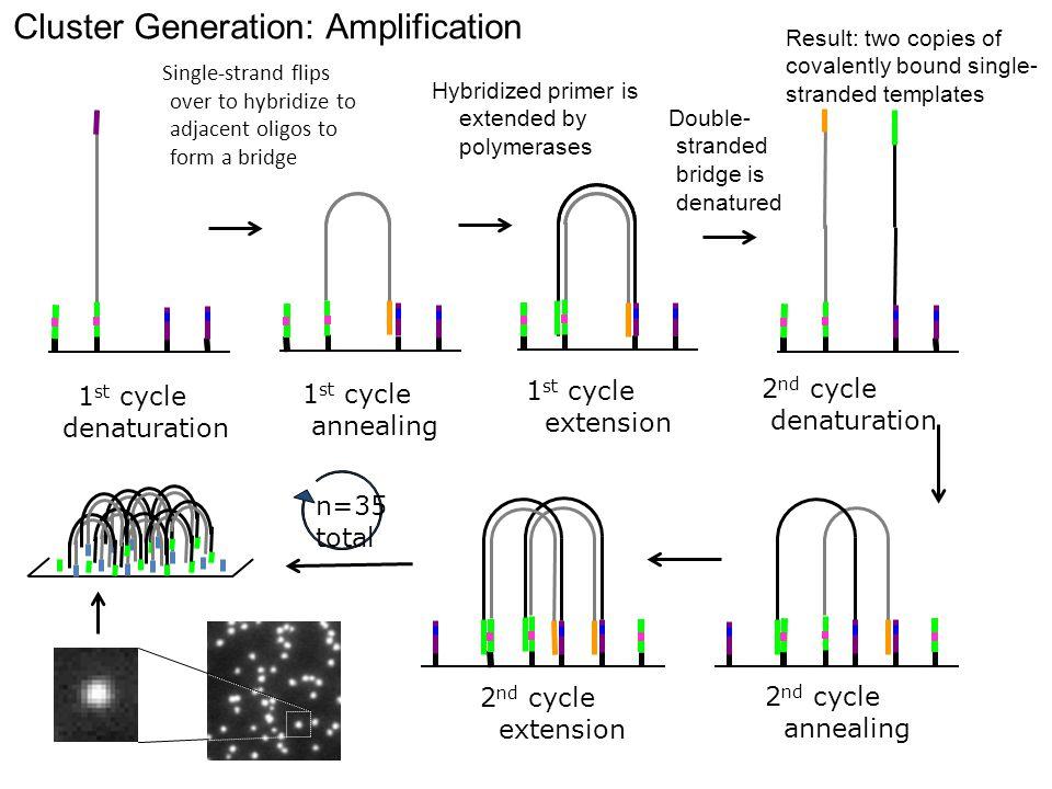 Cluster Generation: Amplification