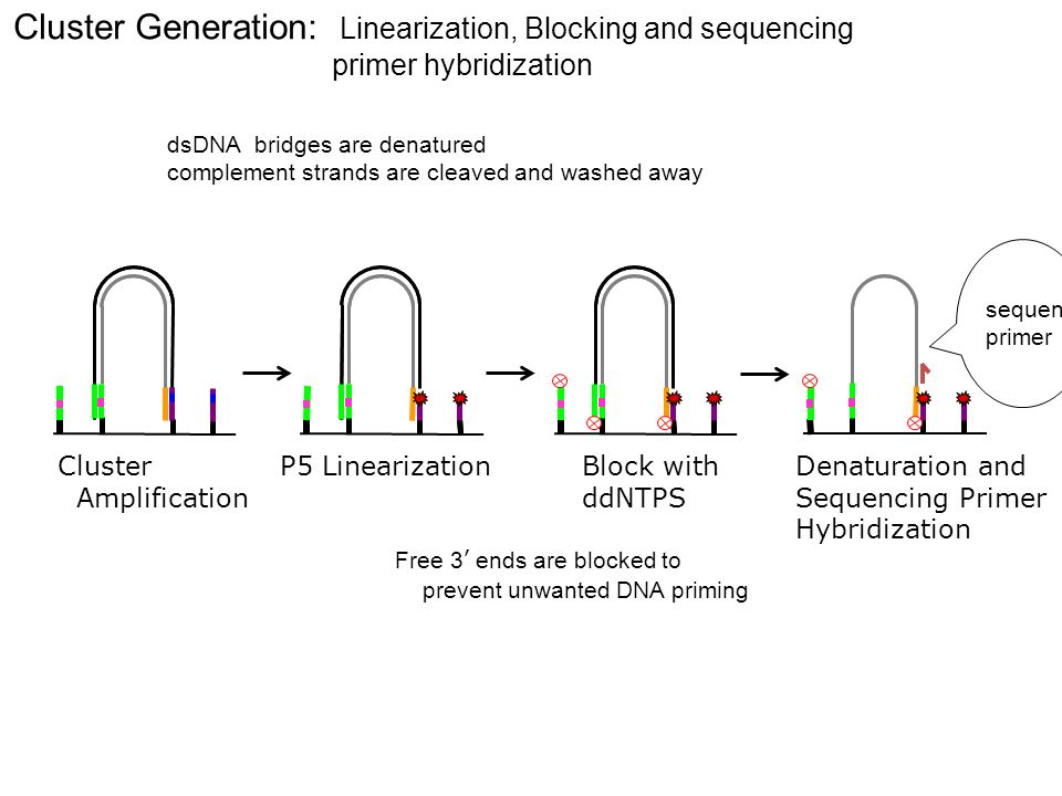 Cluster Generation: Linearization, Blocking and sequencing