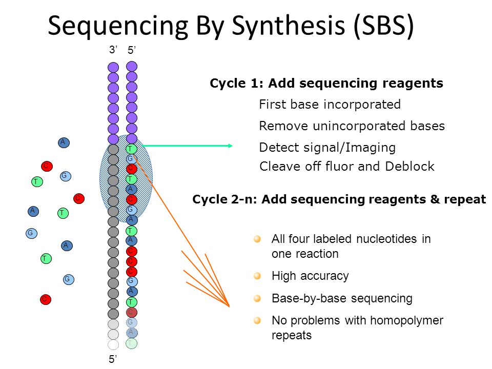 Sequencing By Synthesis (SBS)