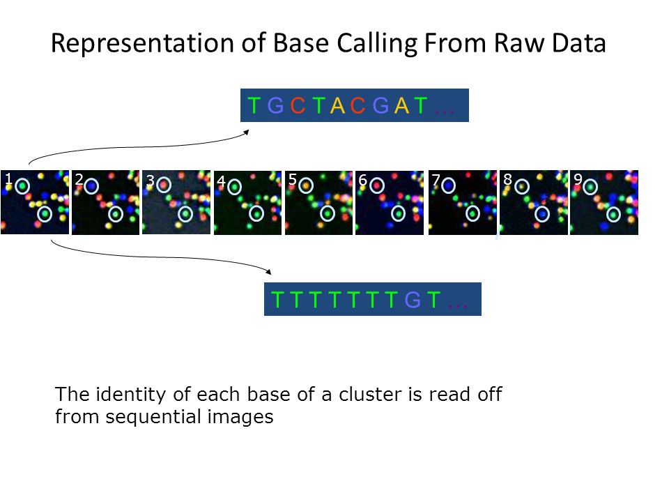 Representation of Base Calling From Raw Data
