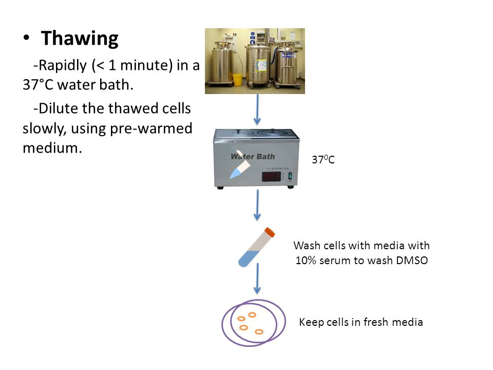 Thawing -Rapidly (< 1 minute) in a 37°C water bath.