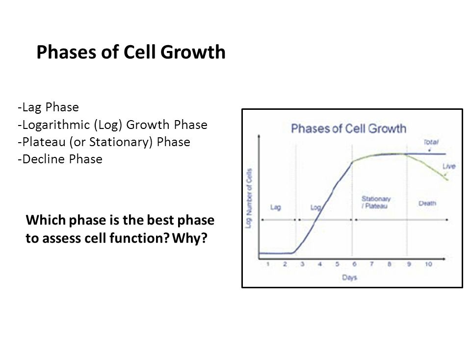 Phases of Cell Growth -Lag Phase -Logarithmic (Log) Growth Phase -Plateau (or Stationary) Phase -Decline Phase.