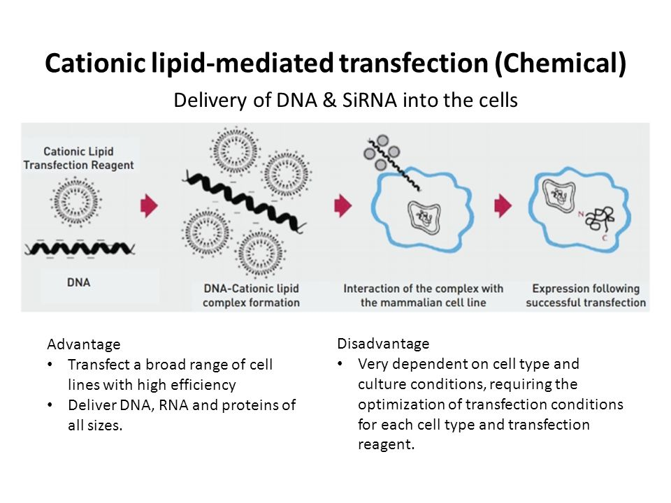 Cationic lipid-mediated transfection (Chemical)