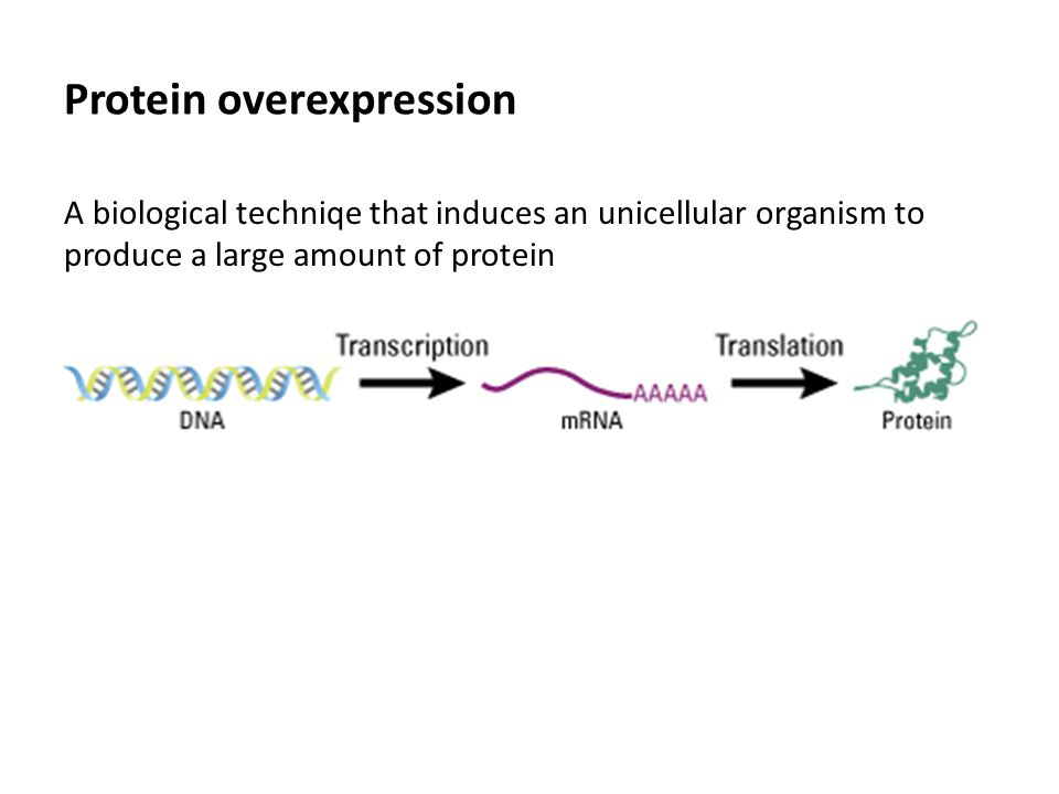Protein overexpression