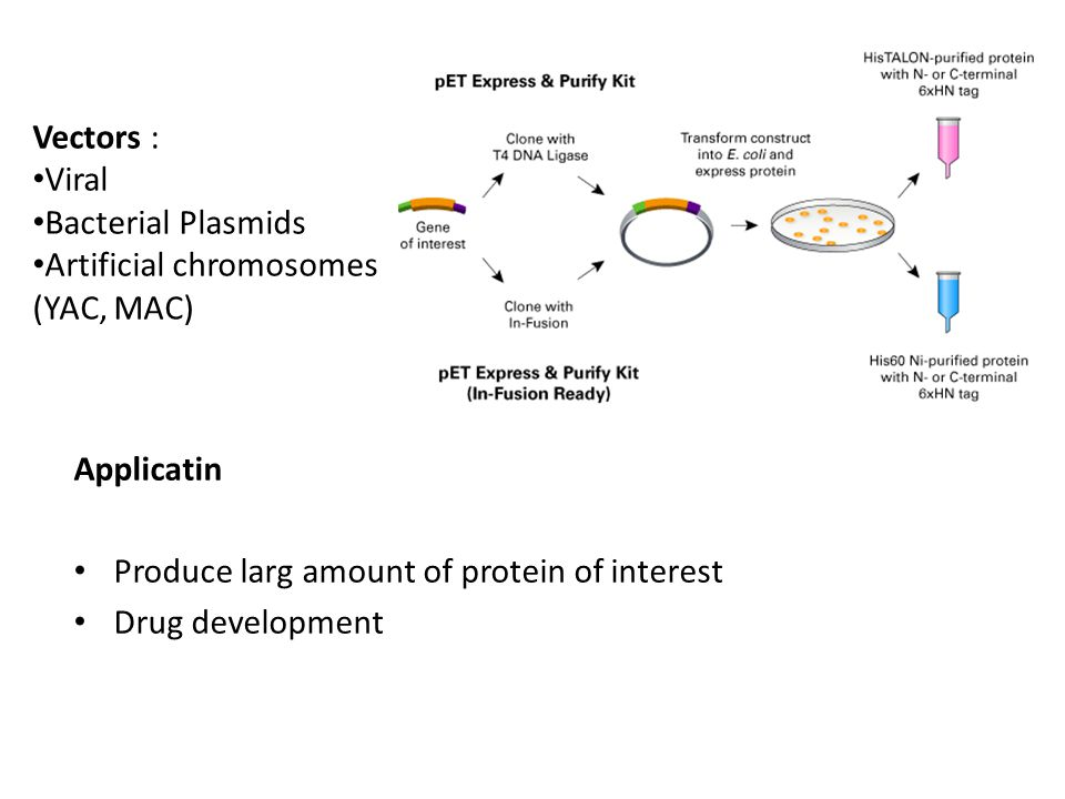 Vectors : Viral. Bacterial Plasmids. Artificial chromosomes (YAC, MAC) Applicatin. Produce larg amount of protein of interest.