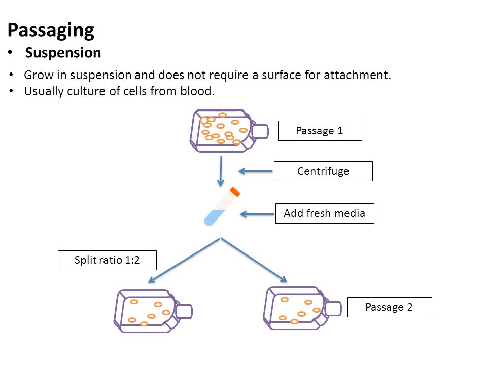 Passaging Suspension. Grow in suspension and does not require a surface for attachment. Usually culture of cells from blood.
