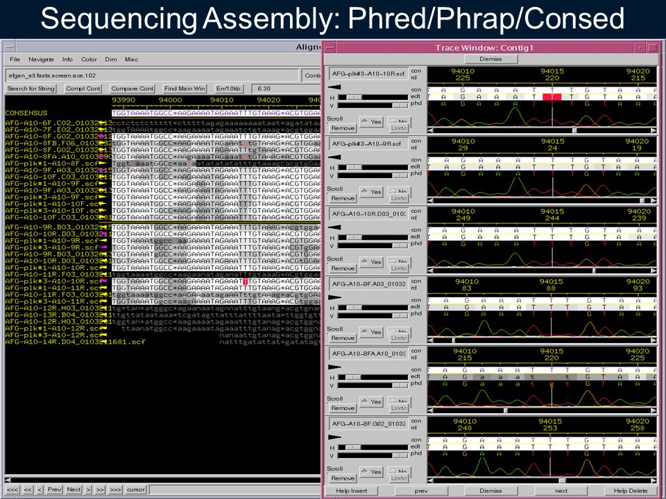 Sequencing Assembly: Phred/Phrap/Consed