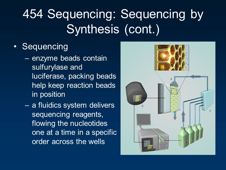 454 Sequencing: Sequencing by Synthesis (cont.)