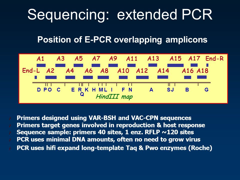 Position of E-PCR overlapping amplicons