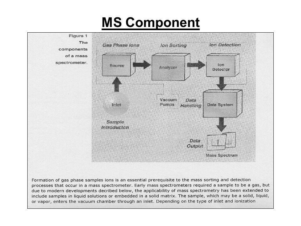 MS Component