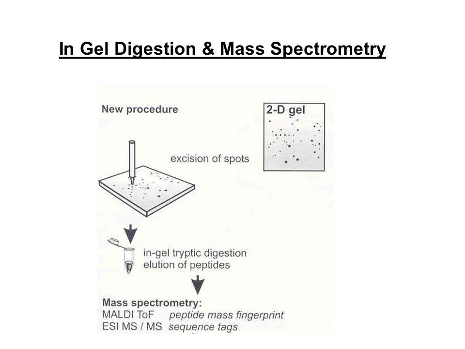 In Gel Digestion & Mass Spectrometry