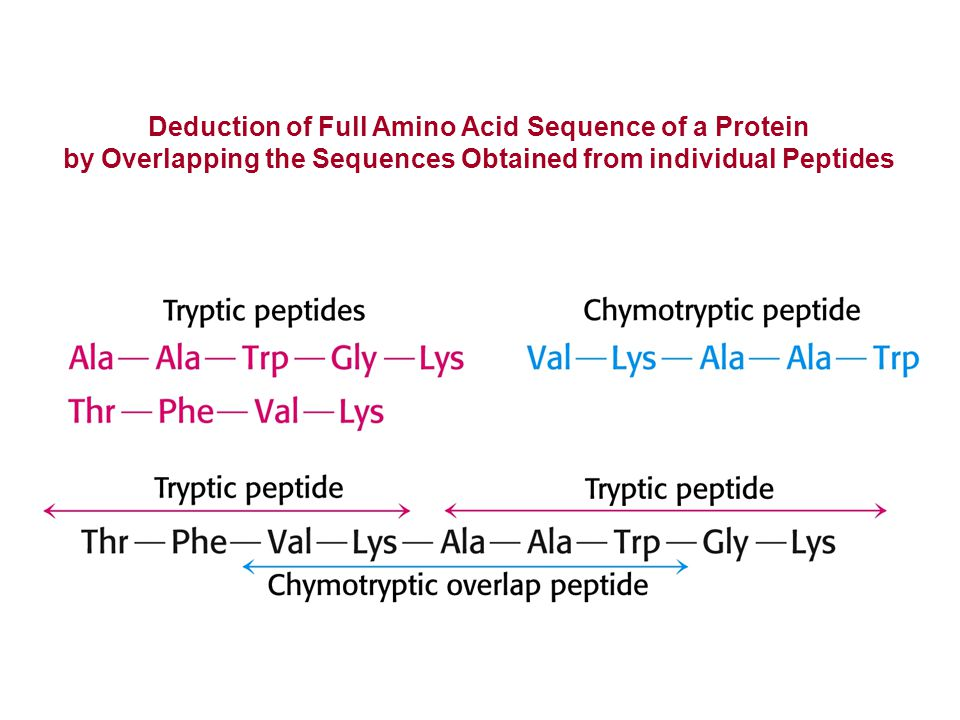 Deduction of Full Amino Acid Sequence of a Protein