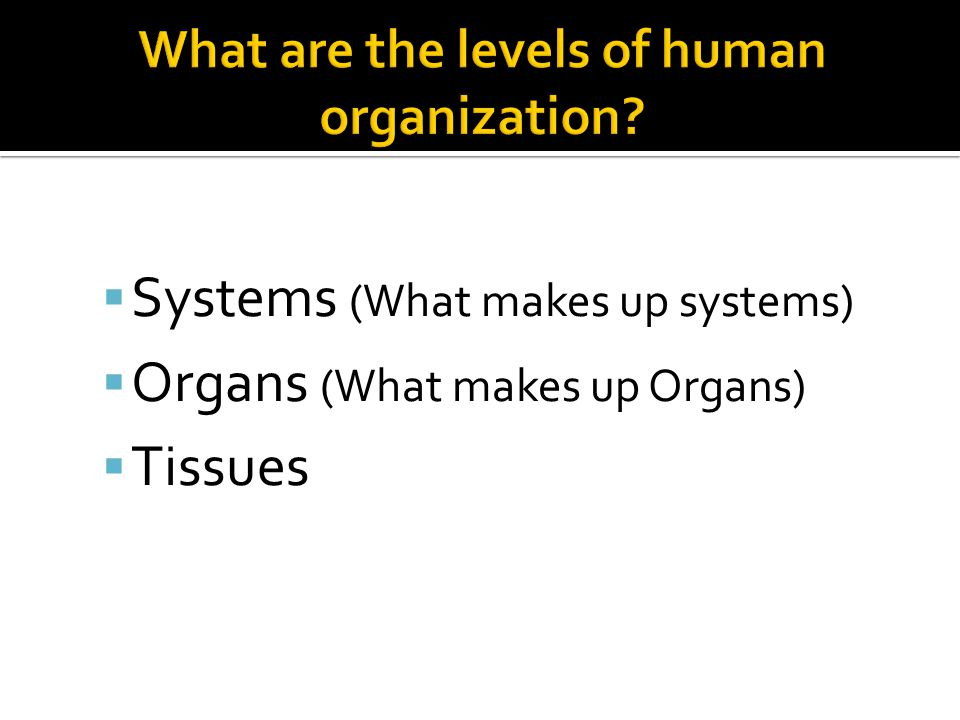 What are the levels of human organization