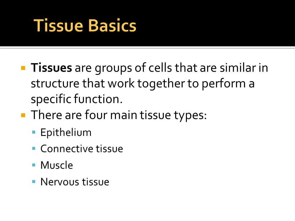 Tissue Basics Tissues are groups of cells that are similar in structure that work together to perform a specific function.