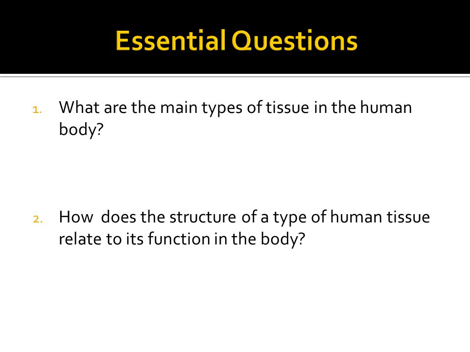 Essential Questions What are the main types of tissue in the human body