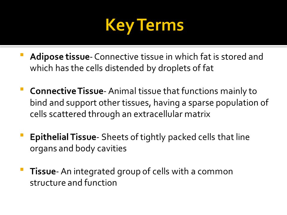 Key Terms Adipose tissue- Connective tissue in which fat is stored and which has the cells distended by droplets of fat.