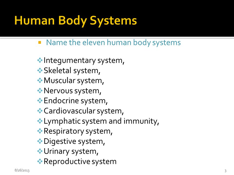 Name the eleven human body systems